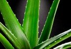 Aloe Vera Juice And Why It's Really Good For You